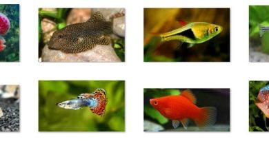 8 loài cá cảnh độc lạ