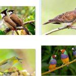 9 loài chim phổ biến nhất việt nam