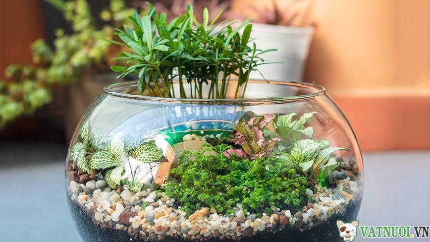 Bể Cá Cảnh mini