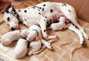 Kinh nghiệm, Cách nuôi Chó con mới đẻ