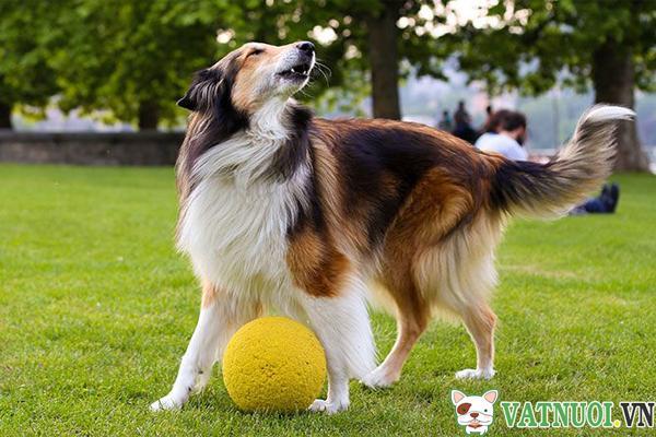Bí quyết huấn luyện chó thành công