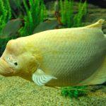 TOP 10 Loại Cá Thủy Sinh Dễ Nuôi và Đẹp cho Người Mới