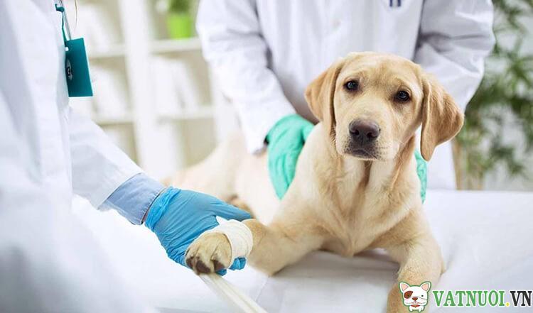 Chăm sóc chó cái sau khi triệt sản