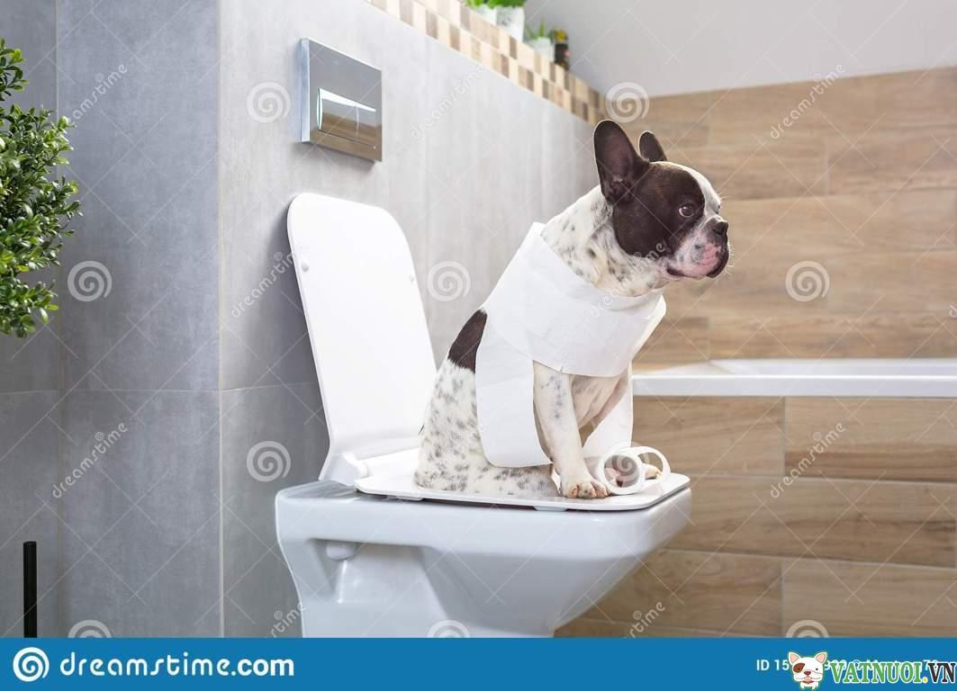 Dạy chó đi vệ sinh