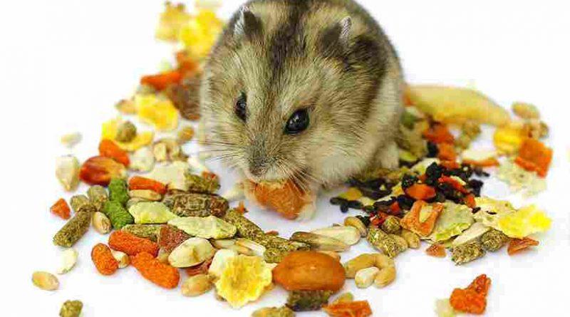 Hamster ăn gì