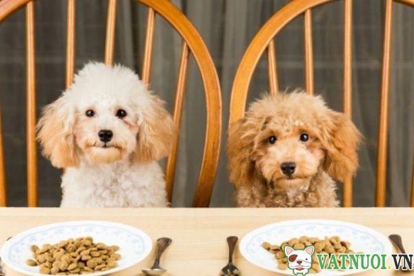 bữa ăn dinh dưỡng cho chó với thức ăn khô
