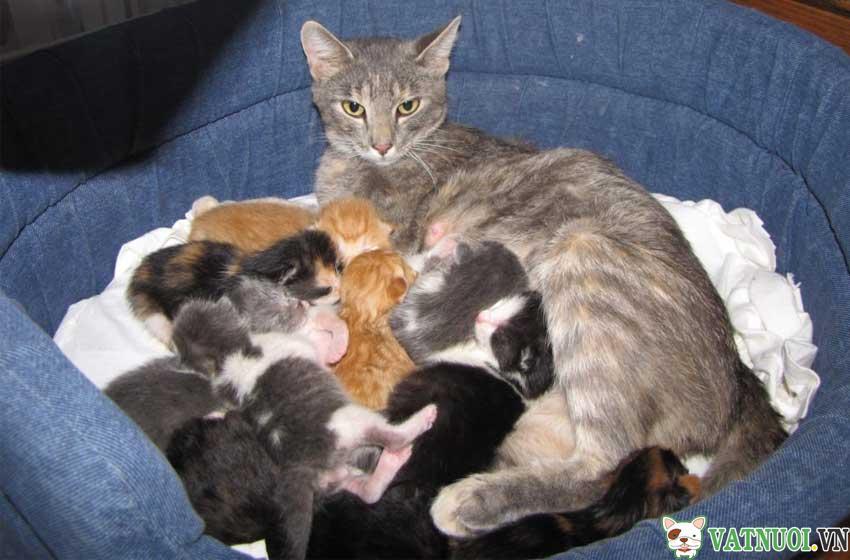 Mèo chửa mấy tháng