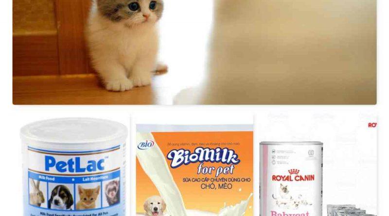 sữa cho mèo con 1 tháng tuổi