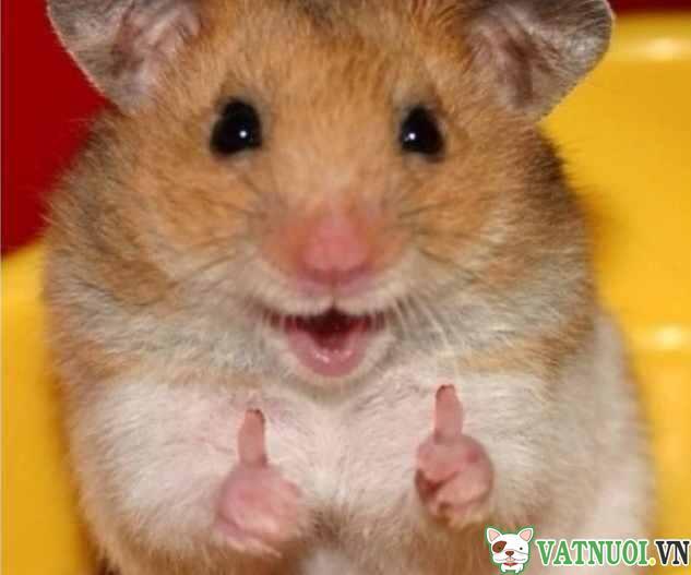 thú cưng hamster