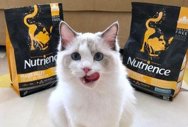 thức ăn cho mèo nutrience subzero