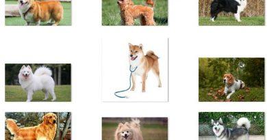 Top 10 giống chó đẹp thông minh trung thành