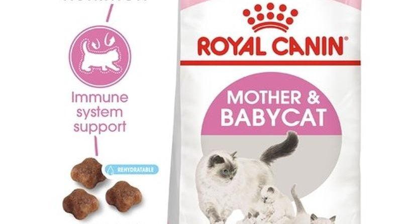 Bán sỉ royal canin mother babycat