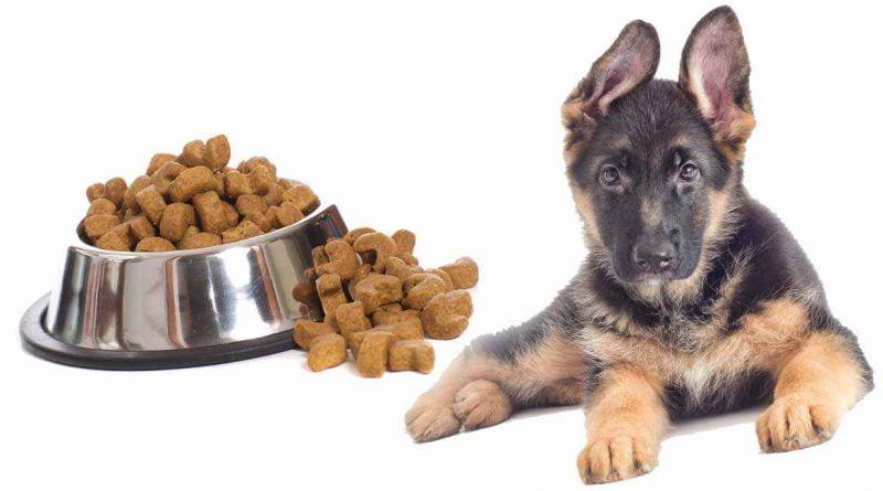 thức ăn cho chó becgie đức