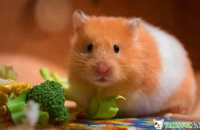 thức ăn cho hamster rau củ quả