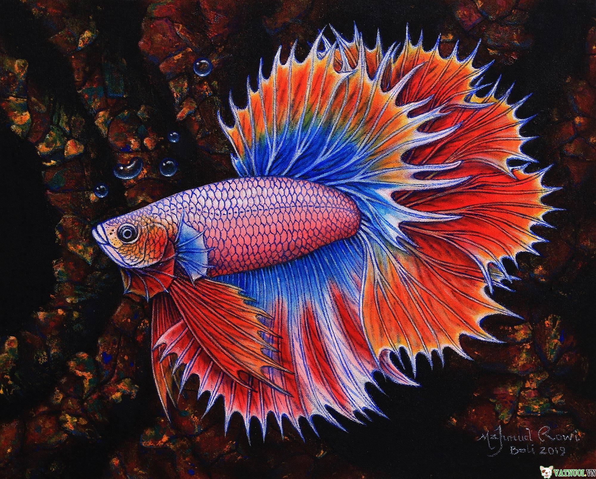 Cá betta rồng